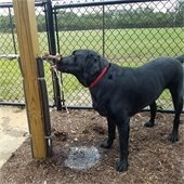 Water spigot at Nags Head's dog park turned off for the winter.